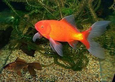 Im genes de venta peces mayorista en carlos paz - Peces koi precio ...