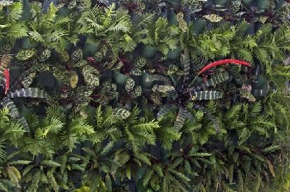 Muros verdes argentina