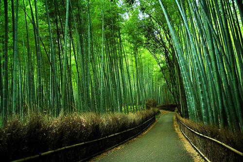 Plantas de bamb es vivero de bambues ornamentales y for Viveros ornamentales