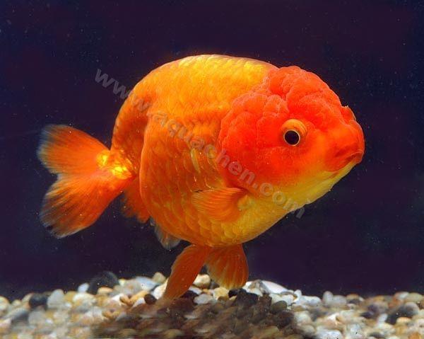 Im genes de criadero de peces acuario22mar en wilde for Criadero de peces