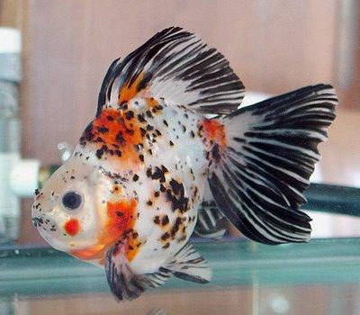 Criadero de peces acuario22mar en wilde for Criadero de peces goldfish
