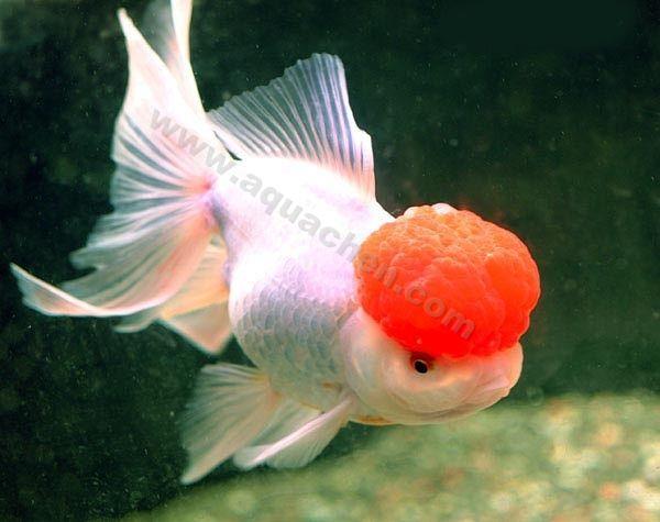 Criadero de peces acuario22mar en wilde for Criaderos de peces de agua fria
